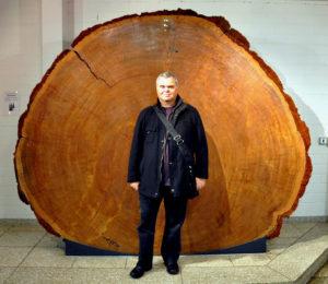 Der Autor vor einem auch sehr großen Lebewesen - Scheibe eines Mammutbaums im GeoMuseum Uni Köln (Aufnahme: R. Moll)